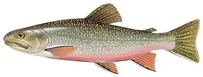 Brook Trout Poster by American School