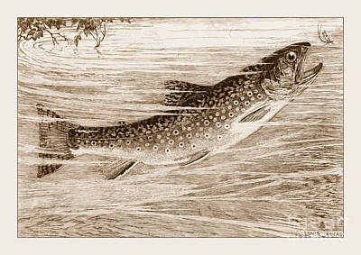 Brook Trout Going After A Fly Poster by John Stephens