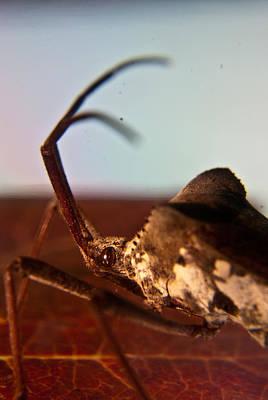 Brown-eyed Bug Poster by Douglas Barnett