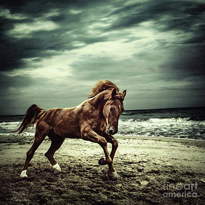 Brown Horse Galloping On The Coastline Poster