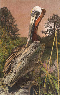 Poster featuring the painting Brown Pelican by John Dyess
