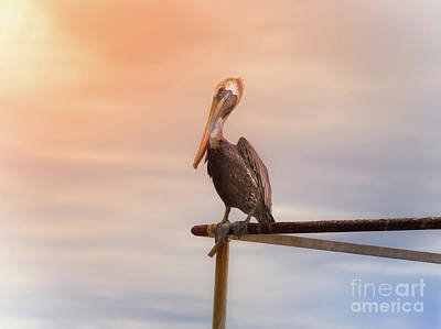 Brown Pelican Sunset Poster by Robert Frederick