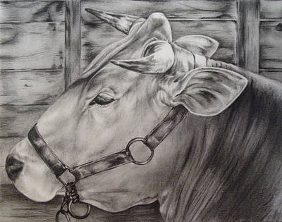 Brown Swiss Poster
