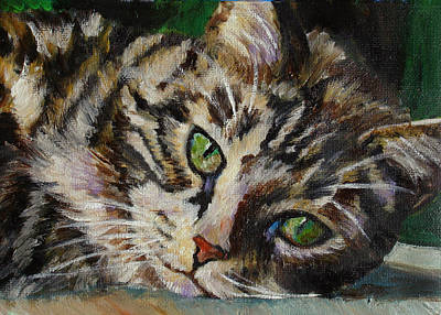 Brown Tabby Cat Poster