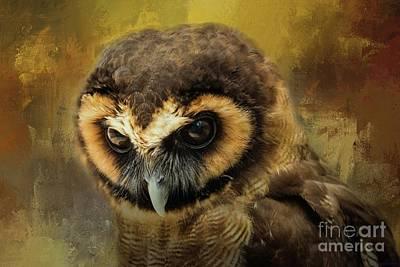 Brown Wood Owl Poster