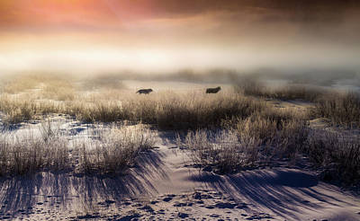 Poster featuring the photograph Brumous Willow Bed // Greater Yellowstone Ecosystem by Nicholas Parker