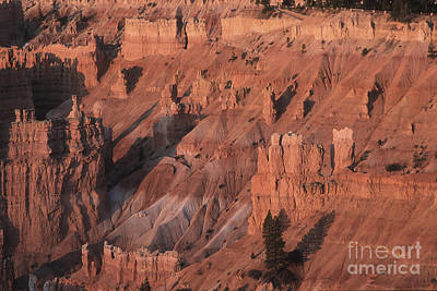 Bryce Canyon At The Golden Hour Poster by Stan and Anne Foster