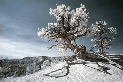 Bryce Canyon Infrared Tree Poster by Mike Irwin