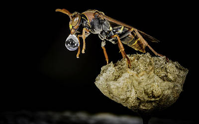 Bubble Blowing Wasp Poster