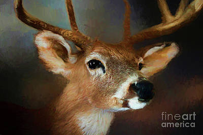Poster featuring the photograph Buck by Darren Fisher