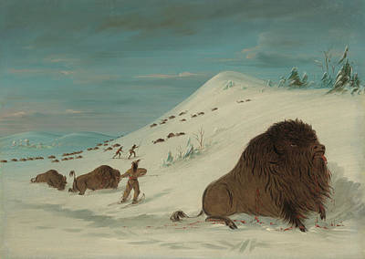 Buffalo Lancing In The Snow Drifts - Sioux American Poster by Mountain Dreams