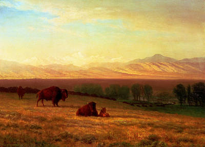 Buffalo On The Plains Poster by Albert Bierstadt