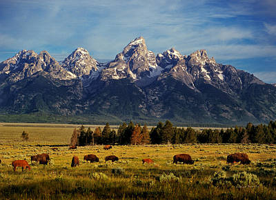 Buffalo Under Tetons 2 Poster by Leland D Howard