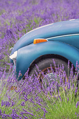 Poster featuring the photograph Bug In Lavender Field by Patricia Davidson