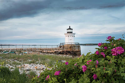 Bug Light Blooms Poster