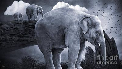 Bull Elephants Poster