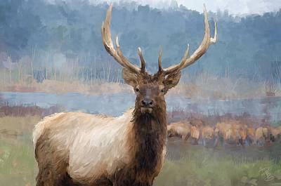 Bull Elk By The River Poster by Debra Baldwin