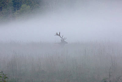 Bull Elk In Fog - September 30, 2016 Poster