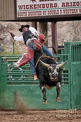 Bull Riding In Wickenburg Arizona Poster by Priscilla Burgers