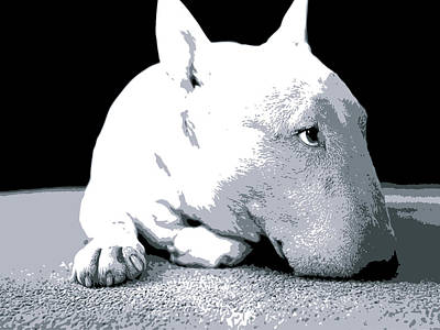 Bull Terrier White On Black Poster by Michael Tompsett