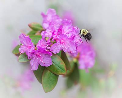 Bumble Bee Poster by Jakub Sisak