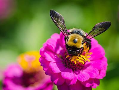Bumble Bee Macro Image Poster
