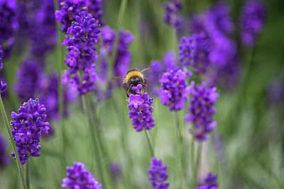 Bumblebee Fields Poster