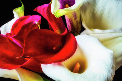 Bunch Of Beautiful Calla Lilies Poster