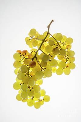 Bunch Of White Grapes Poster by Bernard Jaubert