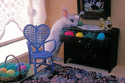 Bunny In Small Room Poster