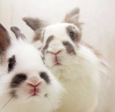 Bunny Pals Poster