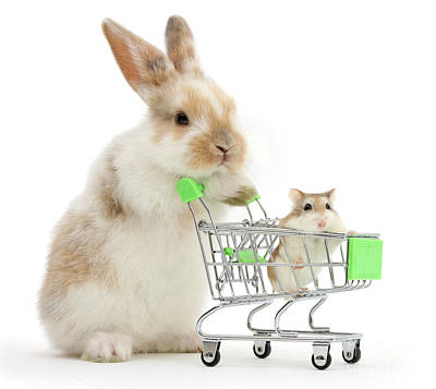 Bunny Shopping Poster