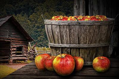 Bushel Of Apples During Harvest Poster