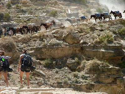 Busy Day On Havasu Canyon Trail Poster by Brent Sisson