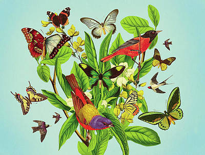 Butterflies And Birds On Plant And Flower Stem Poster