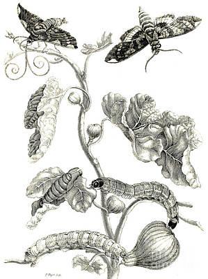 Butterflies, Caterpillars And Plant Poster
