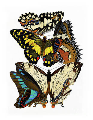 Butterflies, Lush Vintage Etomology Illustration Poster by Tina Lavoie