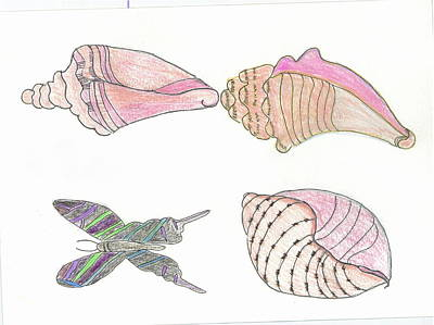 Butterfly And Seashells Poster