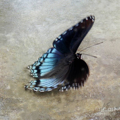 Butterfly Blue On Groovy 3  Poster by Anita Faye