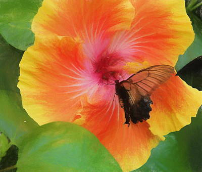 Butterfly Botanical Poster