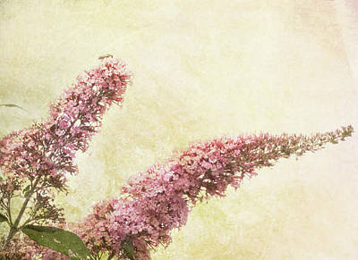 Poster featuring the digital art Butterfly Bush by Margaret Hormann Bfa