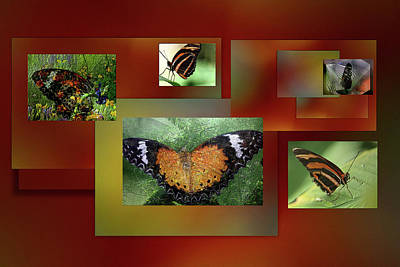 Poster featuring the photograph Butterfly Colllage by Irma BACKELANT GALLERIES
