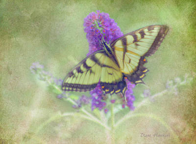 Butterfly Fantasy Poster by Diane Hawkins