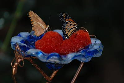 Poster featuring the photograph Butterfly Fruit by Richard Bryce and Family