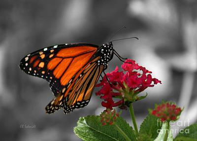 Poster featuring the photograph Butterfly Garden 01 - Monarch by E B Schmidt