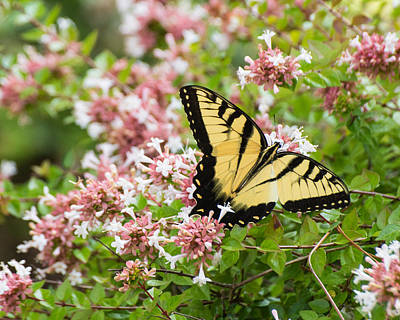 Poster featuring the photograph Butterfly Haven by Julie Andel