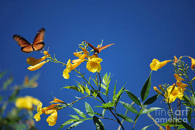 Poster featuring the photograph Butterfly In The Sonoran Desert Musuem by Donna Greene