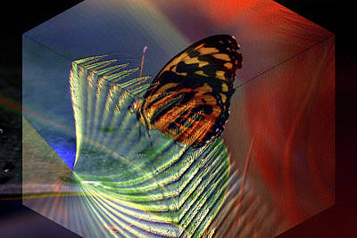 Poster featuring the photograph Butterfly Morphing by Irma BACKELANT GALLERIES