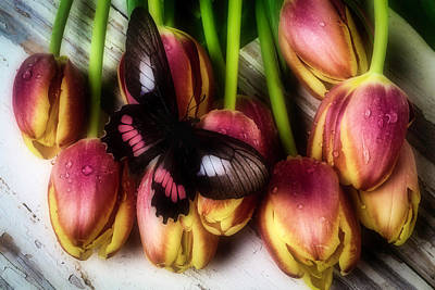 Butterfly On Dewy Tulips Poster by Garry Gay