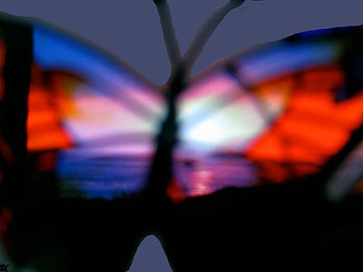 Butterfly Sunsets Collection  Poster
